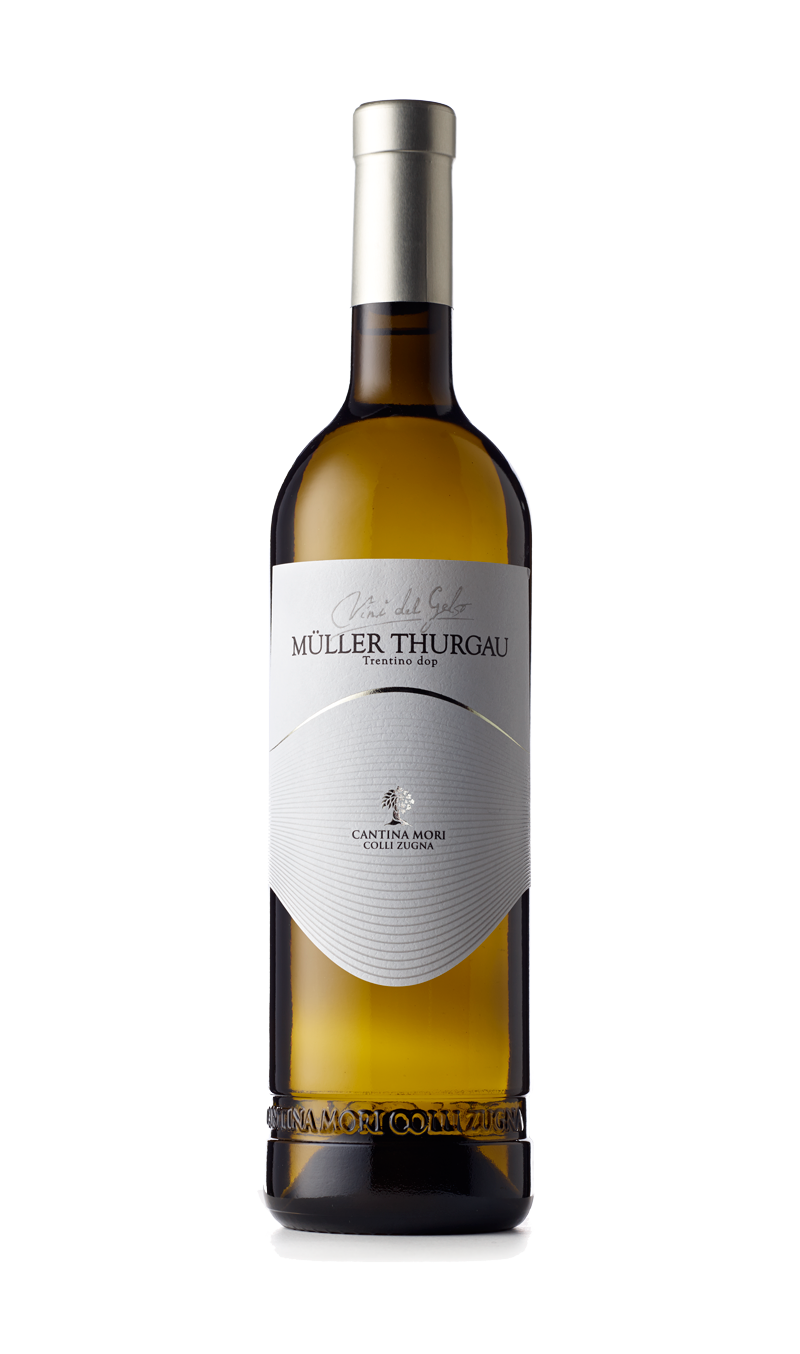 Müller Thurgau Trentino DOP